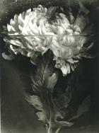 Medallas al Mérito en las Bellas Artes 2011